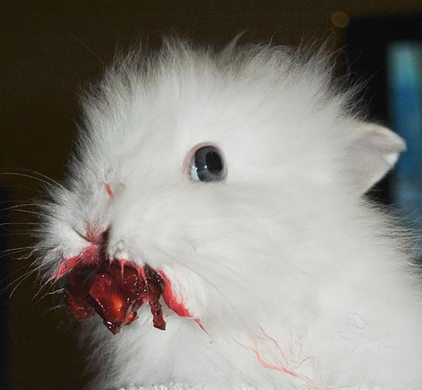 超ふわふわ!モフモフで愛らしいウサギの画像20枚 (13)