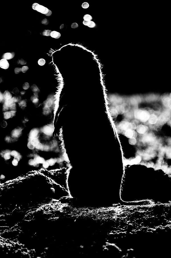 アウトラインとシルエットが美しい白黒の動物写真 8