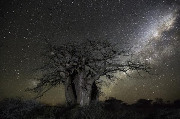 星空と古い木の美しい風景写真 6
