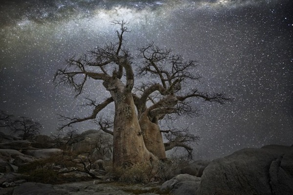 星空と古い木の美しい風景写真