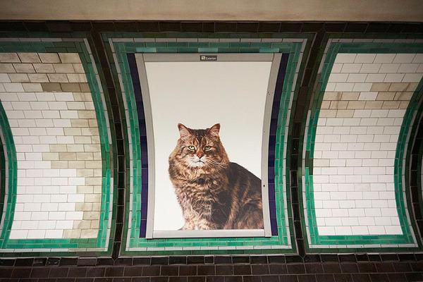 猫だらけ!猫の写真で満たされたロンドンの地下鉄 (2)