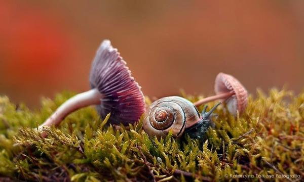 メルヘンチック!カタツムリの小さな世界を激写 (13)