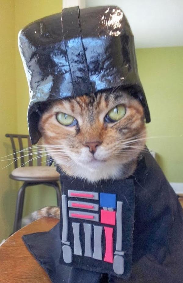 コスプレ猫!ハロウィンだし仮装した猫画像 (1)