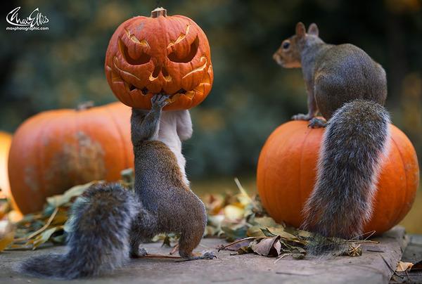 紅葉や秋の森の中を楽しむ動物たちの画像 (2)
