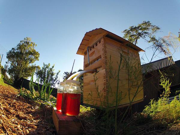 新しい蜂の巣