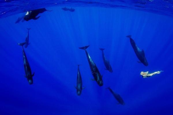 ザトウクジラとモデルのダイバーが一緒に海中を泳ぐ 9