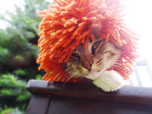 かわいさアップ?猫にぴったりなペット用ニット帽! (5)