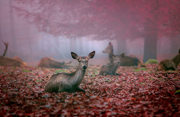 紅葉や秋の森の中を楽しむ動物たちの画像 (27)