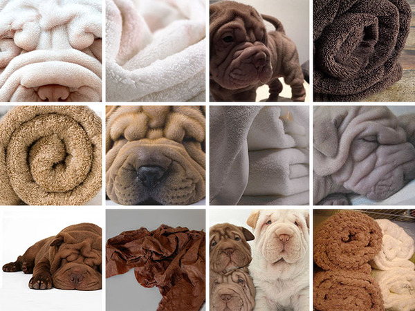 何かとそっくりな犬の比較画像 (2)