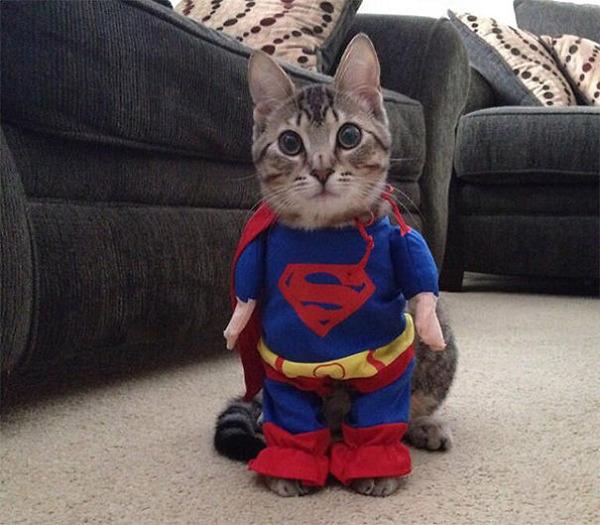 コスプレ猫!ハロウィンだし仮装した猫画像 (6)