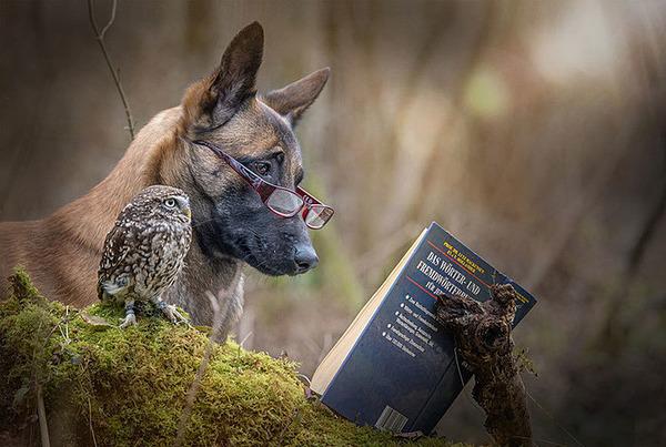 犬とフクロウの仲良し画像 (3)