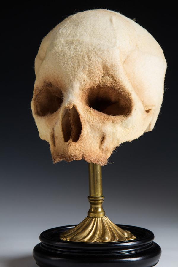 ウールやシルクから作られた骨格標本アート (4)