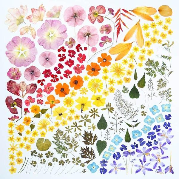 物で虹の色彩を作るアート写真プロジェクト (10)