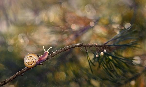 メルヘンチック!カタツムリの小さな世界を激写 (1)