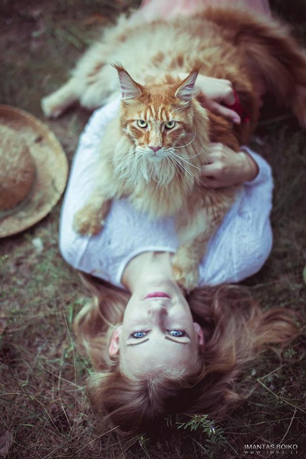 でかすぎる!大型のイエネコ長毛種メインクーン画像【猫】 (36)