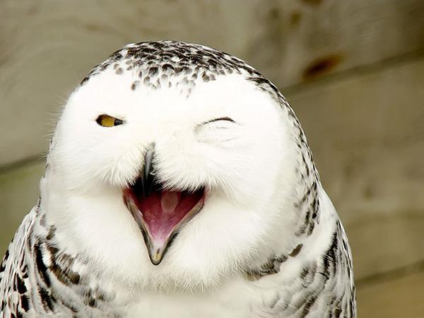 ニッコリ。幸せそうな笑顔が素敵な動物画像特集! (24)