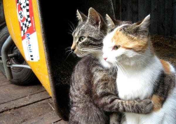 猫のバレンタインデー!【猫ラブラブ画像】 (47)