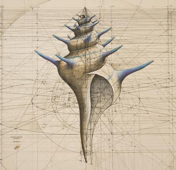 黄金比で描かれた手描きイラスト集!蝶や貝殻など (5)
