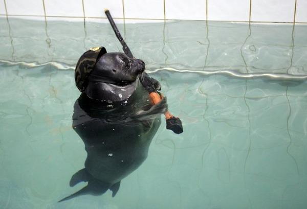 SEALS,ロシアのオットセイの軍事訓練、VEデー 6