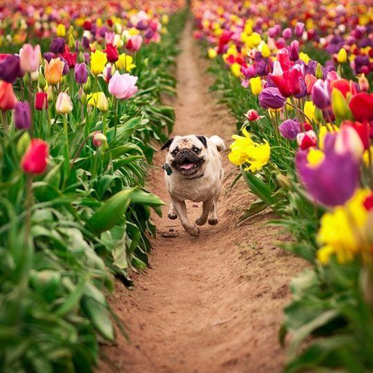 幸せそうな表情を見せる可愛い動物画像10