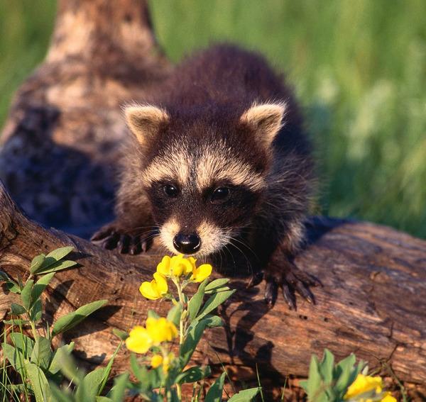 くんくん良い香り。花の匂いを嗅ぐ動物たちの画像 (27)