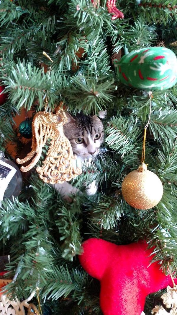 猫、あらぶる!クリスマスツリーに登る猫画像 (39)