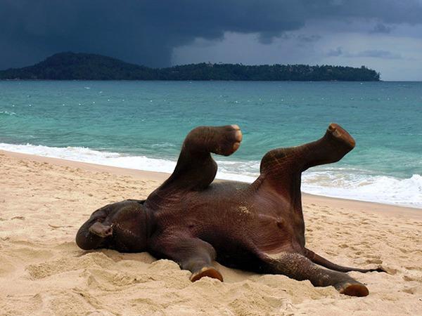 モデルのようにポーズを取る可愛い動物特集 ゾウ