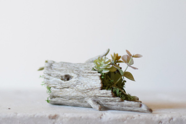 動物や植物な樹脂製アートプランター!『HARIMOGURA』 (8)