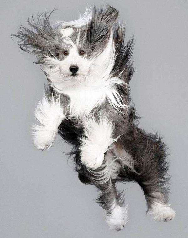 飛ぶ犬!空飛ぶわんこの絶妙な表情が逸品な写真 (4)