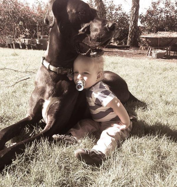ペットは大切な家族!犬や猫と人間の子供の画像 (38)