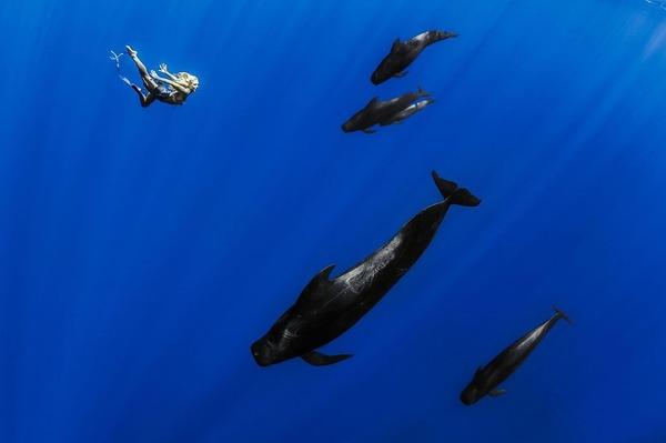 ザトウクジラとモデルのダイバーが一緒に海中を泳ぐ 6