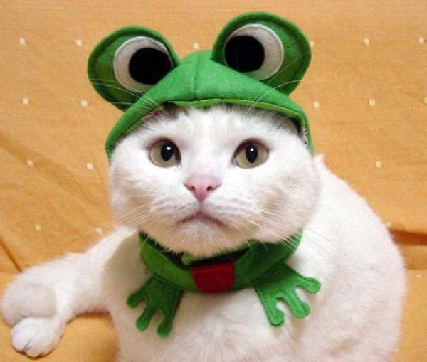 コスプレ猫!ハロウィンだし仮装した猫画像 (18)