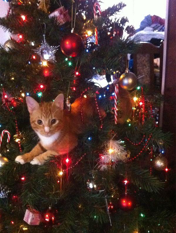 猫、あらぶる!クリスマスツリーに登る猫画像 (28)