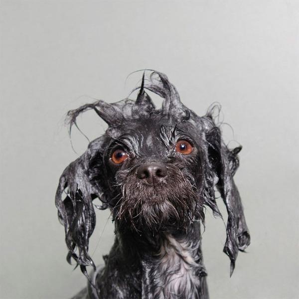 洗い立てだぜ!濡れた犬の写真シリーズ『Wet Dog』 (3)