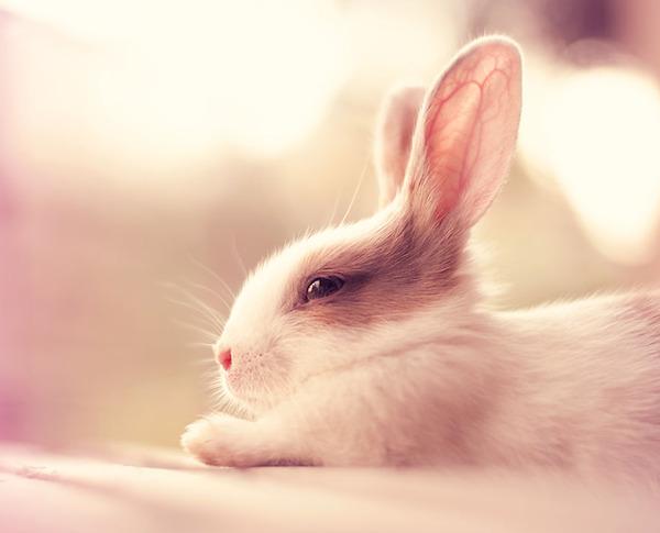 眠たそうなウサギ