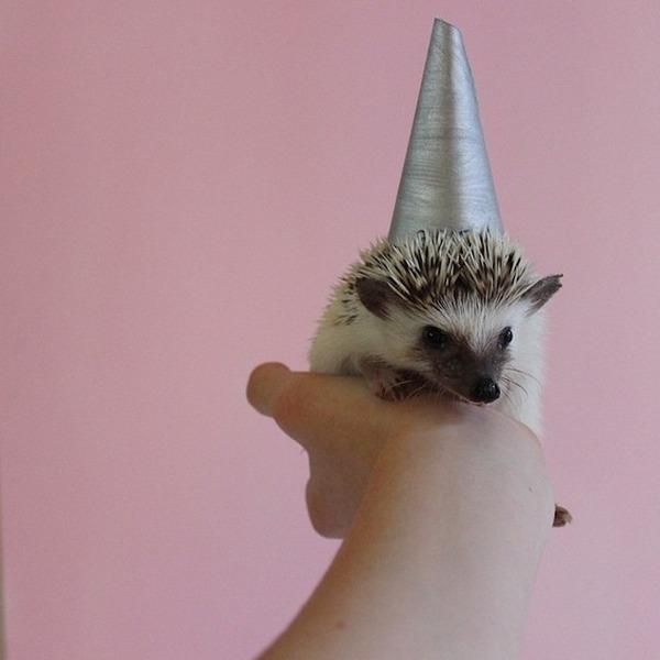 帽子をかぶったハリネズミ