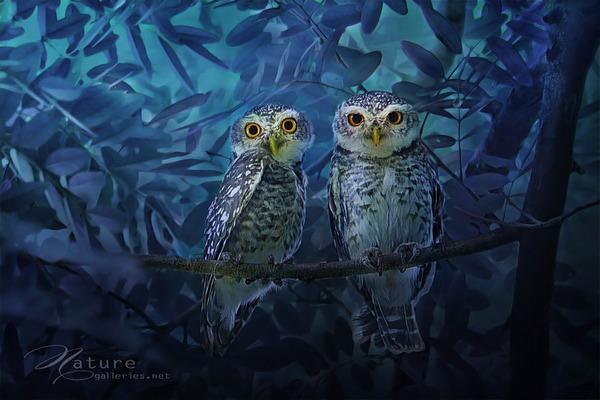 可愛いフクロウの画像 7