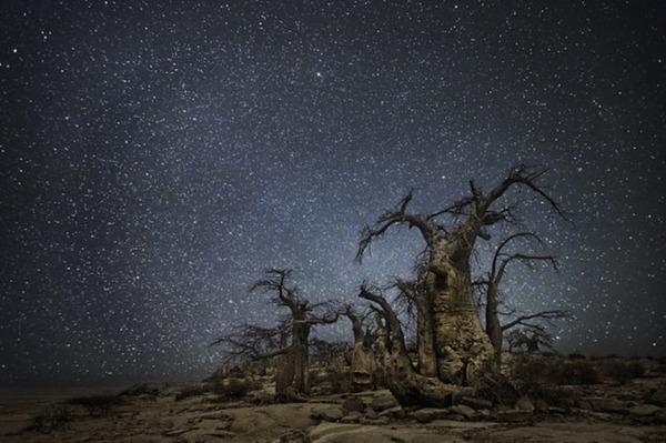 星空と古い木の美しい風景写真 4