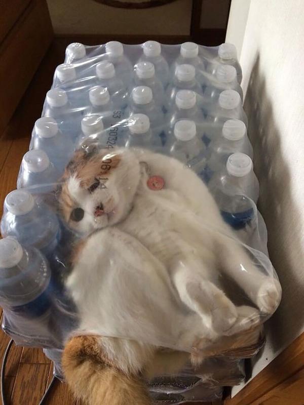 大ピンチに陥ったドジっ子なにゃんこ達!【猫画像33枚】 (16)