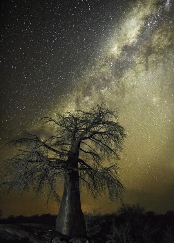 星空と古い木の美しい風景写真 3