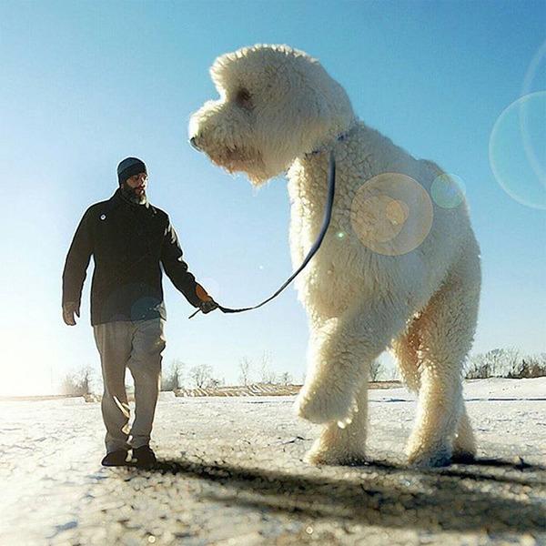 犬を大きくする!そんな夢をフォトショップの画像加工 (9)