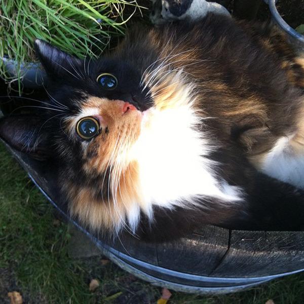 盲目の迷い猫。珍しい毛色のキメラネコが愛を知る (2)