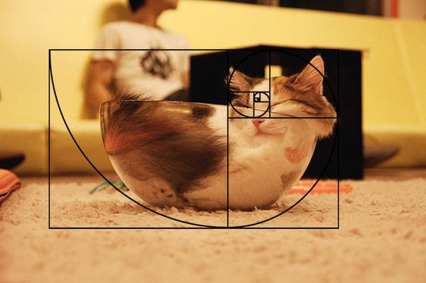 猫と黄金比の関係画像!猫の美しさの秘訣は黄金比にあり (15)