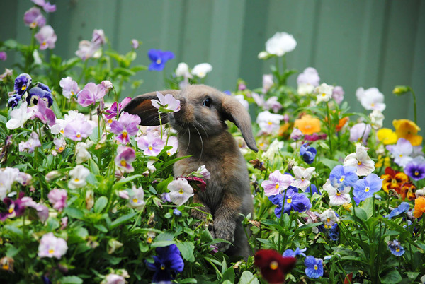 くんくん良い香り。花の匂いを嗅ぐ動物たちの画像 (38)