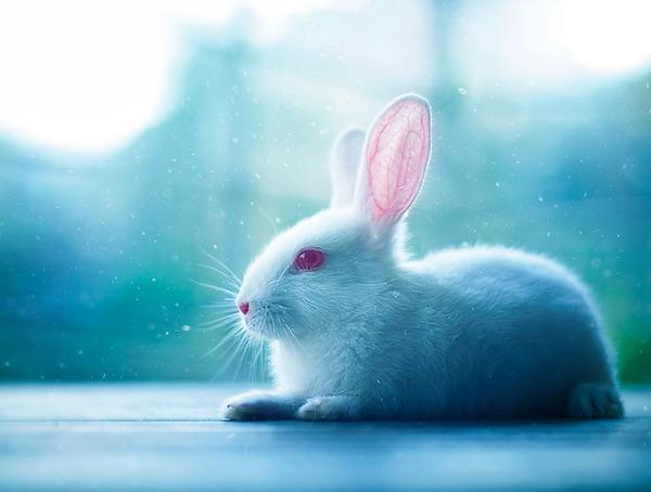 雪の下のウサギ