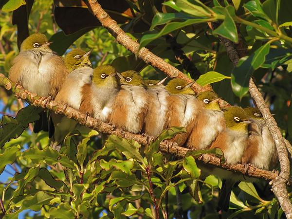 小鳥が温まる為に皆で寄り添っている可愛い画像 (14)