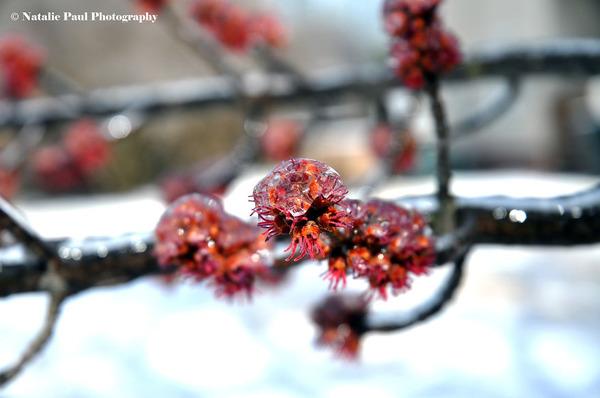氷霧の後の花11