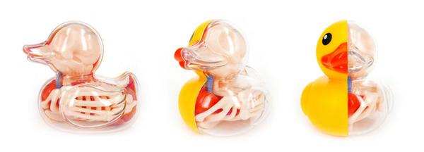 骨や内臓まで丸見え!解剖学のような動物のスケルトンの玩具 (5)
