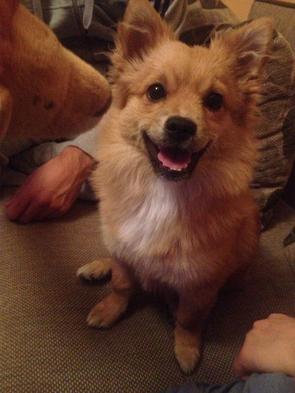 愛嬌たっぷりな笑顔を振りまくわんこ達!【犬画像】 (23)