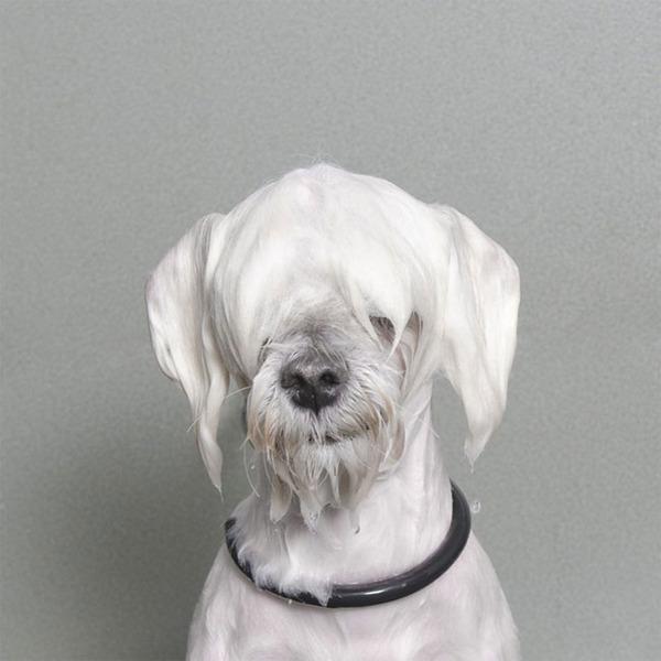 洗い立てだぜ!濡れた犬の写真シリーズ『Wet Dog』 (18)